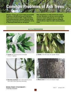 Common Problems of Ash Trees.pdf