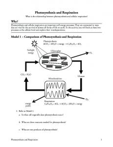 POGIL - Photosynthesis and Respiration.pdf