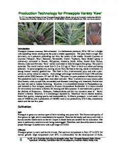 Production technology for Pineapple Variety Kew.pdf