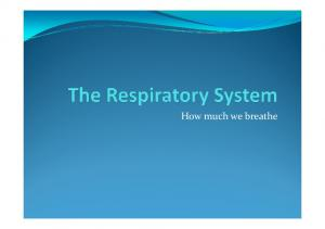 The Respiratory System 2 [Compatibility Mode]